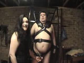 Fat coxcomb is tied up plus..